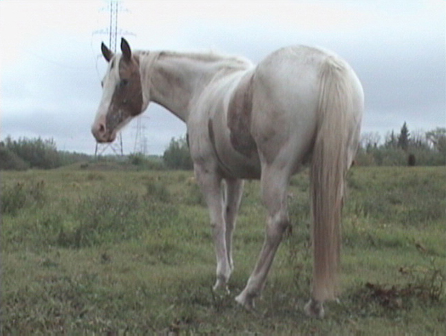 a horse called Memory video still - from experimental video short by contemporary Canadian First Nations artist Jude Norris